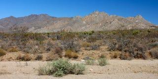 Mojaveöken sydliga Kalifornien Arkivfoto