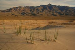 Mojave. Afternoon light, Kelso Dunes,Mojave National Preserve,CA Royalty Free Stock Photos