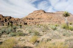 Mojave Stock Photos