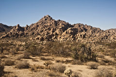 Mojave Desert. Mountains in Mojave Desert from Joshua Tree National Park in Indian Canyon stock image