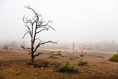 Mojave desert. Burnt trees in Mojave Desert National Park Stock Photo
