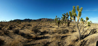 Mojave Desert, California Stock Photography
