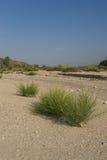 Mojave Desert Dry Wash Stock Photography