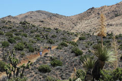Free Mojave Desert Landscape Royalty Free Stock Photo - 26097545