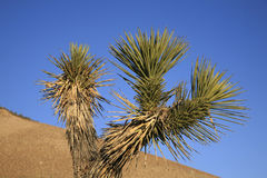 Mojave desert. The Mojave Desert is located in the southwestern United States and is composed of Death Valley, Pahrump Valley, Amargosa Valley, the Las Vegas Royalty Free Stock Photography