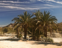 Mojave Desert Oasis. This is a scene from the Mojave Desert stock photography