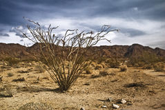 Mojave Desert Scene. From Joshua Tree National Park stock photo