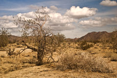 Mojave Desert Scene. From Joshua Tree National Park stock image