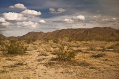 Mojave Desert Scene Royalty Free Stock Images