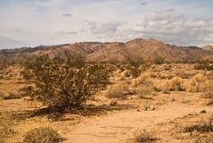 Mojave Desert Scene Stock Image