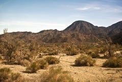 Mojave Desert Scene Stock Photos