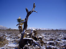Mojave Desert In snow Royalty Free Stock Image