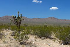 Mojave Desert - southern California. The dry landscape of the Mojave National Preserve in California Stock Photography