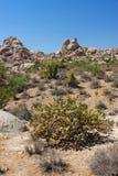 Mojave Desert - southern California Stock Images