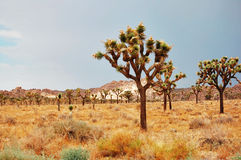 Mojave Desert Stock Photos