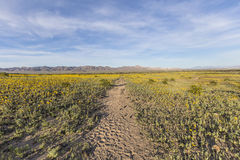 Mojave Desert Spring Wildflowers near Amboy Crater Royalty Free Stock Photography