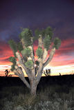 Mojave Desert Sunset Royalty Free Stock Image