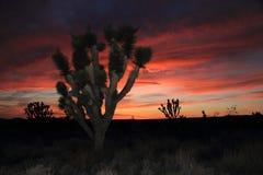Mojave Desert Sunset Stock Image