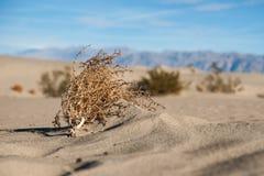 Mojave Desert Tumbleweed Royalty Free Stock Photos