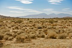 Mojave Desert US14 Royalty Free Stock Images