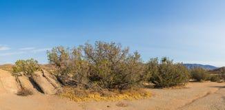 Mojave Desert Wilderness Stock Photography