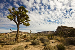 Mojave Landscape Royalty Free Stock Images