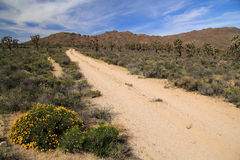 Mojave National Preserve Royalty Free Stock Images