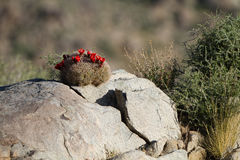 Mojave National Preserve Stock Images