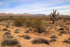 Mojave National Preserve Royalty Free Stock Photography