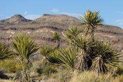 Mojave-nationale Konserve Lizenzfreie Stockfotos