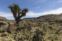Mojave-nationale Konserve Barber Loop Trail Lizenzfreie Stockfotografie