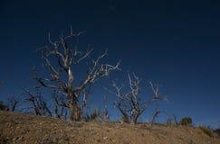 Mojave night sky Stock Photo