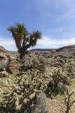 Mojave prezerwy fryzjera męskiego pętli śladu Joshua Krajowy drzewo Fotografia Stock