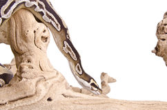 Mojave Royal Python Royalty Free Stock Photos