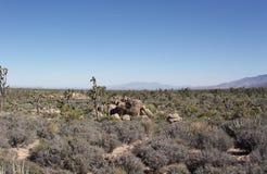 Mojave-Wüste Lizenzfreie Stockfotografie
