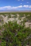 Mojave-Wüste Süd-Kalifornien Stockfotos