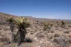 Mojave Woestijn, deserto del Mojave fotografia stock libera da diritti