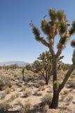 Mojave Woestijn, Mojave pustynia zdjęcie stock