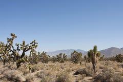 Mojave Woestijn, Mojave-Wüste lizenzfreies stockfoto