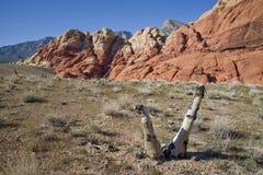 Mojave Yucca at Red Rock Canyon Stock Image