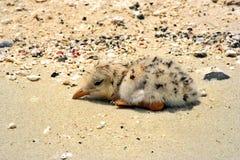 Moje el polluelo Imagen de archivo libre de regalías