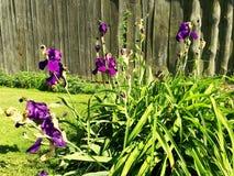 moje kwiaty Zdjęcia Royalty Free