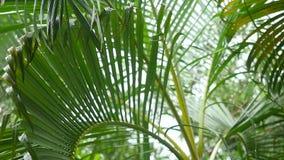 Moje las hojas de palma lluviosas que soplan por el viento en la isla tropical Cámara lenta 1920x1080 almacen de metraje de vídeo