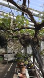 moje ogrody Zdjęcie Royalty Free