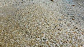 Moje una playa de pequeños guijarros Foto de archivo