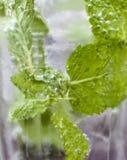Mojito玻璃显示的薄菏和泡影的饮料closup 免版税库存图片