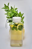 Mojito. In carafe with fresh mint Royalty Free Stock Images