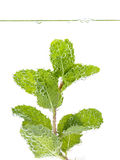 Mojito cocktail with fresh mint leaves isolate  on white. Royalty Free Stock Photo