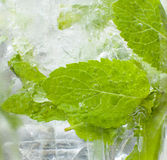 Mojito drink closup of the glass showing mint and bubbles. Mojito drink closup of the glass showing mint lief surrounded by bubbles Stock Photography