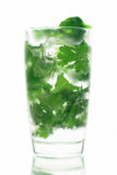 Mojito long drink. Close up with ice and coriander Stock Images